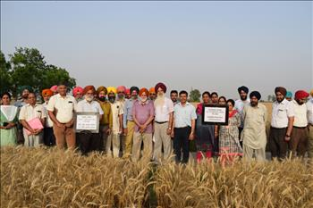 Field day on PAU-LCC technology to empower farmers to avoid excessive use of fertilizer urea in crops